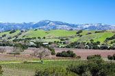 Santa Barbara Wine Area — Stock Photo