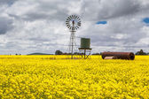 Canola Fields Near Smeaton — Stock Photo
