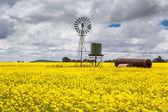 Canola Fields Near Smeaton — Stock Photo