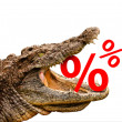 Percentage signs eaten by crocodile for sale, crash or discount. — Stock Photo