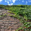 Climbing green ivy on an old brick wall outdoors against blue sky — Stock Photo #43584633