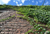 Climbing green ivy on an old brick wall outdoors against blue sky — Stock Photo
