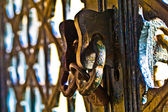铁门扣锁 Iron gate padlock — Stock Photo