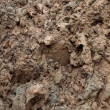 Soil — Video Stock #36026549