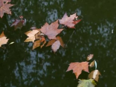 Deciduous floating in the water over the — Stockvideo