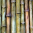 Bamboo background. — Foto de Stock