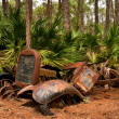 Abandoned old vehicle in a Florida forest — Stock Photo