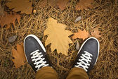 I hösten skogen. ovanlig vy - från mina ögon — Stockfoto