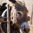 Donkey in harness — Stock Photo #23821191