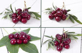 Composition of cherries isolated — Stock Photo