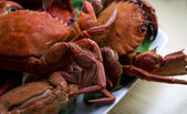 Seafood isolated — Photo