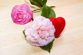 Valentines card with camellias — Stock Photo