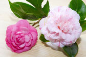 Camellias with heart — Stock Photo