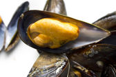 Tasty mussels with parsley — Foto Stock
