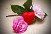 Camellias bottom — Stock Photo