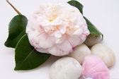 Camellias with cotton — Stock fotografie