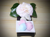 Camellias with cotton — Stockfoto