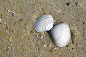 Shells in the sand — Foto Stock