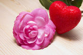 Camellias and red heart — Stock Photo