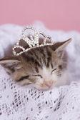 Kitten — Stock fotografie
