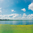 Panorama of the summer overgrown lake. — Stock Photo