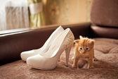 Kitten red.Kitten red.Kitten red. — Stock Photo
