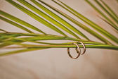 Rings and fern. — Stock Photo