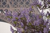 Eiffel Tower behind the flowering tree — Stock Photo