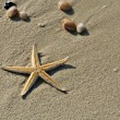 Starfish and seashells on a beach — Foto de stock #25626515