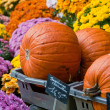 Pumpkins and flowers — Stock Photo #34263271