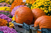 Pumpkins and flowers — Stock Photo