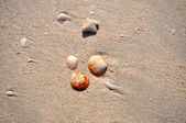 Seashells on a beach on a bright summer day — Stock Photo