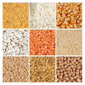 Open dry food crops — Stock Photo