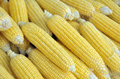 Fresh Corns at the Market — Stock Photo