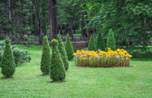 Garden with lawns and flowers — Stock Photo