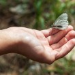 Butterfly on the palm — Stock Photo