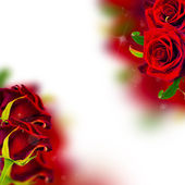 Background with red roses and bokeh — Stock Photo