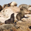 Seals - Stock Photo