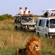 Safari in Africa - Foto Stock