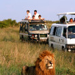 Safari in Afrika — Stockfoto