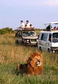 Safari in Africa — Stock Photo