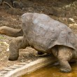 Lonesome George - Stock Photo