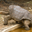 Stock Photo: Lonesome George
