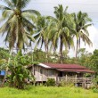 Stock Photo: Home in Kinabatangan river, Borneo
