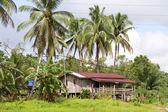 Thuis in kinabatangan rivier, borneo — Stockfoto