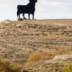 Spanish bull — Stock Photo #23321240