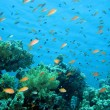 Coral reef in Red Sea — Stock Photo