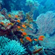 Coral reef in Red Sea — Stock Photo #23341632