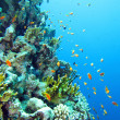 Coral reef in Red Sea — Foto de Stock