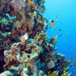 Coral reef in Red Sea — Stock Photo #23342024
